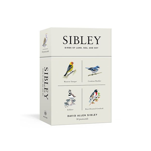 Sibley Birds of Land, Sea, and Sky (Postcard, 50ea)