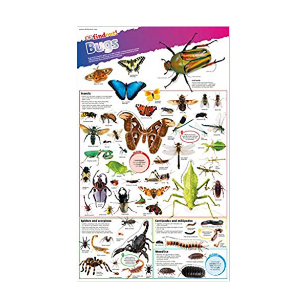 DK find out! Bugs Poster (Wall Chart, 영국판)