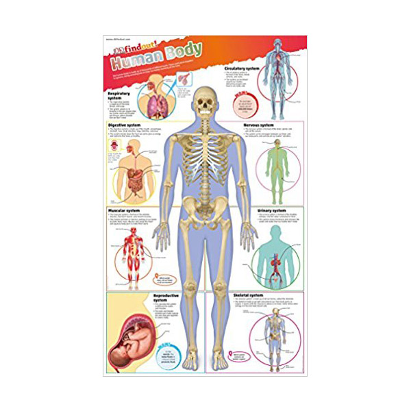 DK find out! Human Body Poster (Wall Chart)