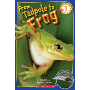 RL 2.3 : Scholastic Reader Level 1 : From Tadpole to Frog (Paperback)