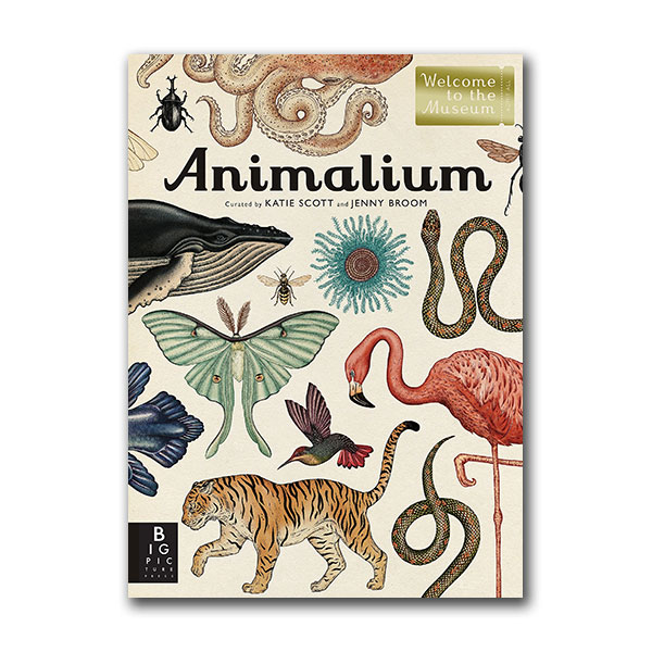 Welcome to the Museum : Animalium (Hardcover)