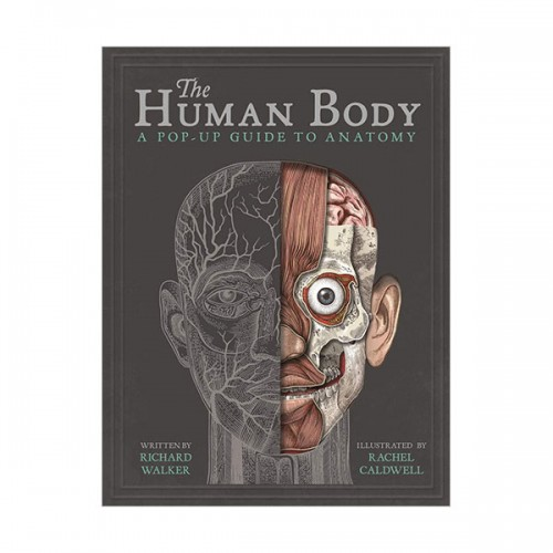 The Human Body : A Pop-Up Guide to Anatomy (Hardcover, 영국판)
